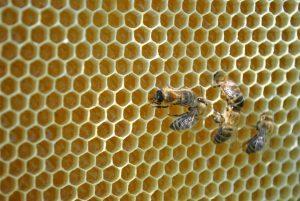 Imkerei Hillenbrand - Honig aus Bensheim